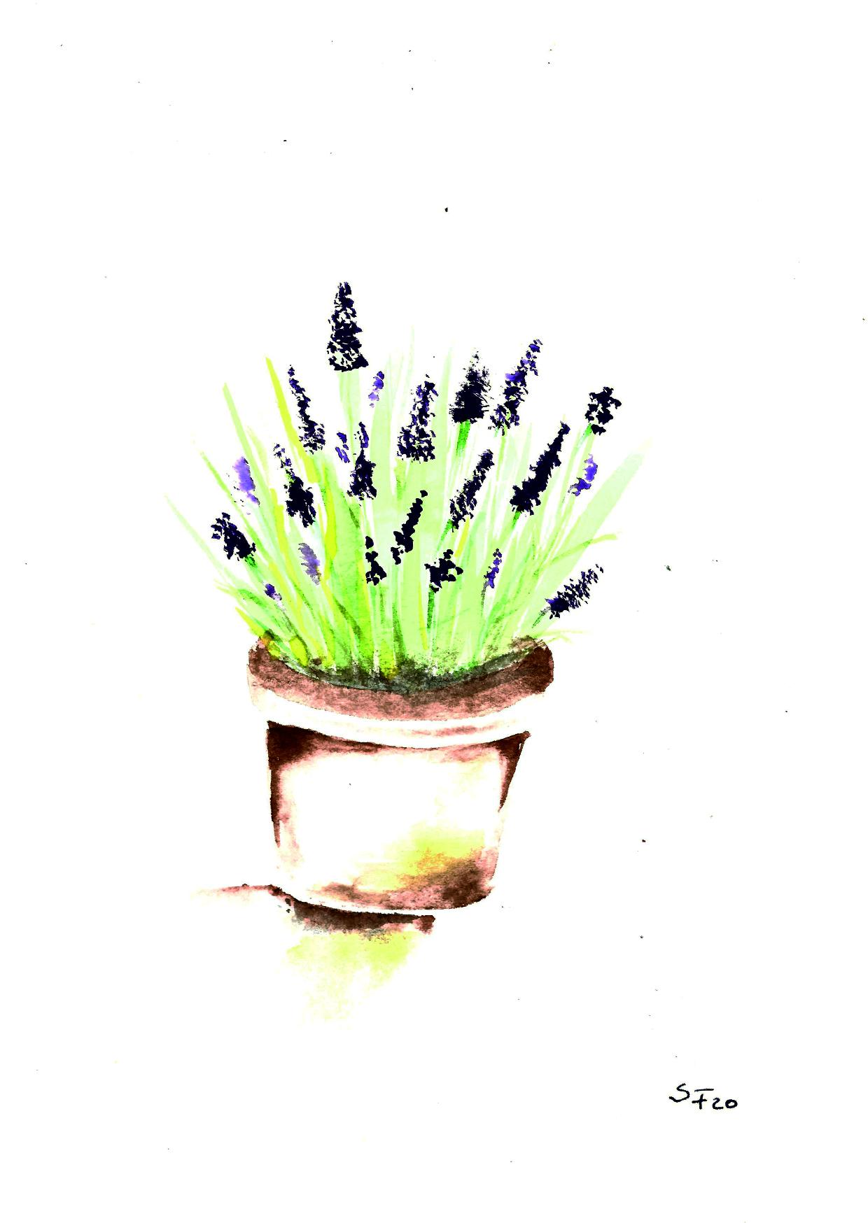 Aquarell Lavendeltopf 04/20