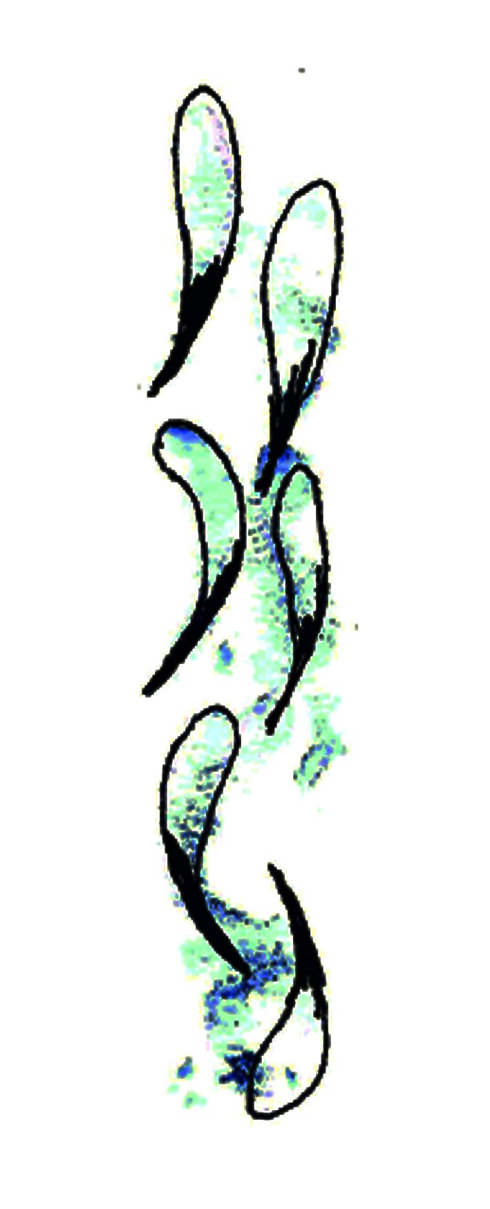 Aquarell Lesezeichen V 03/20