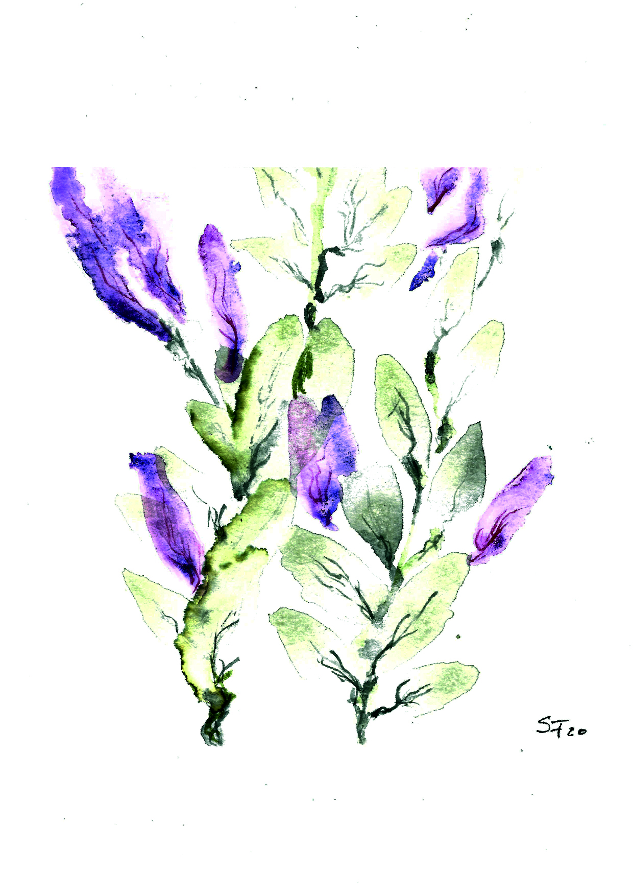 Aquarell lila Blüten 03/20