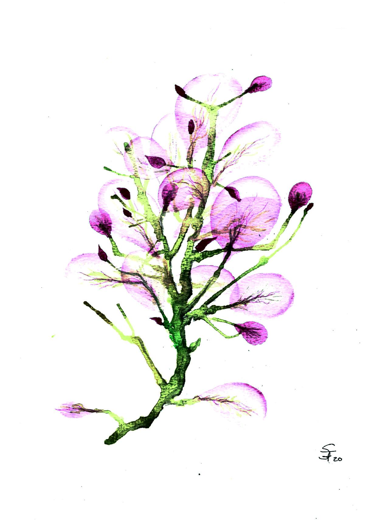 Aquarell rosa Blüten 03/20
