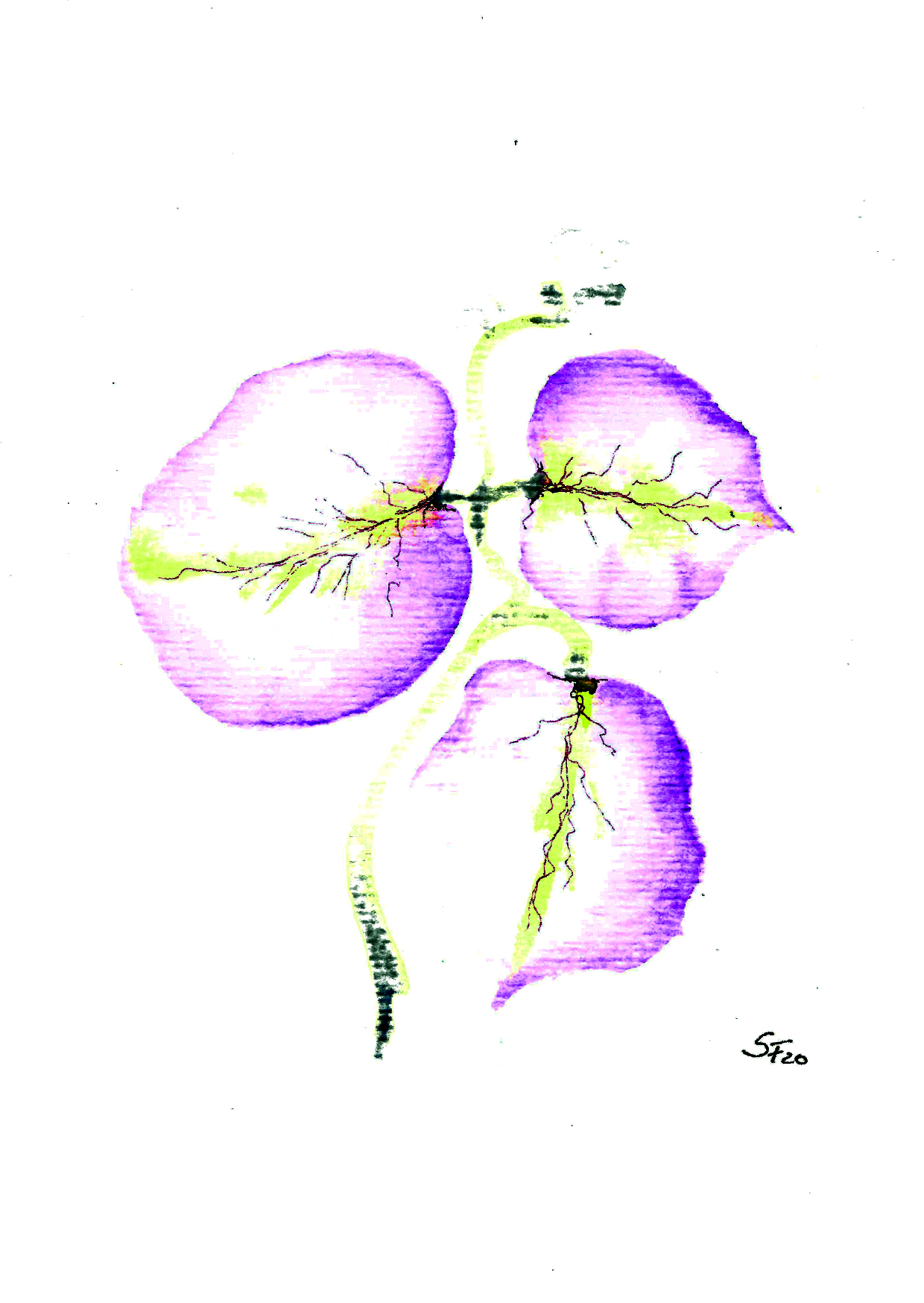 Aquarell rosa Blüten drei große 03/20