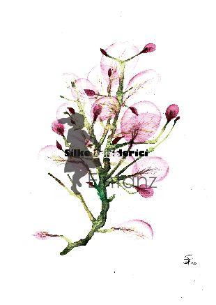 Wasserzeichen_Aquarell rosa Blüten 03-20